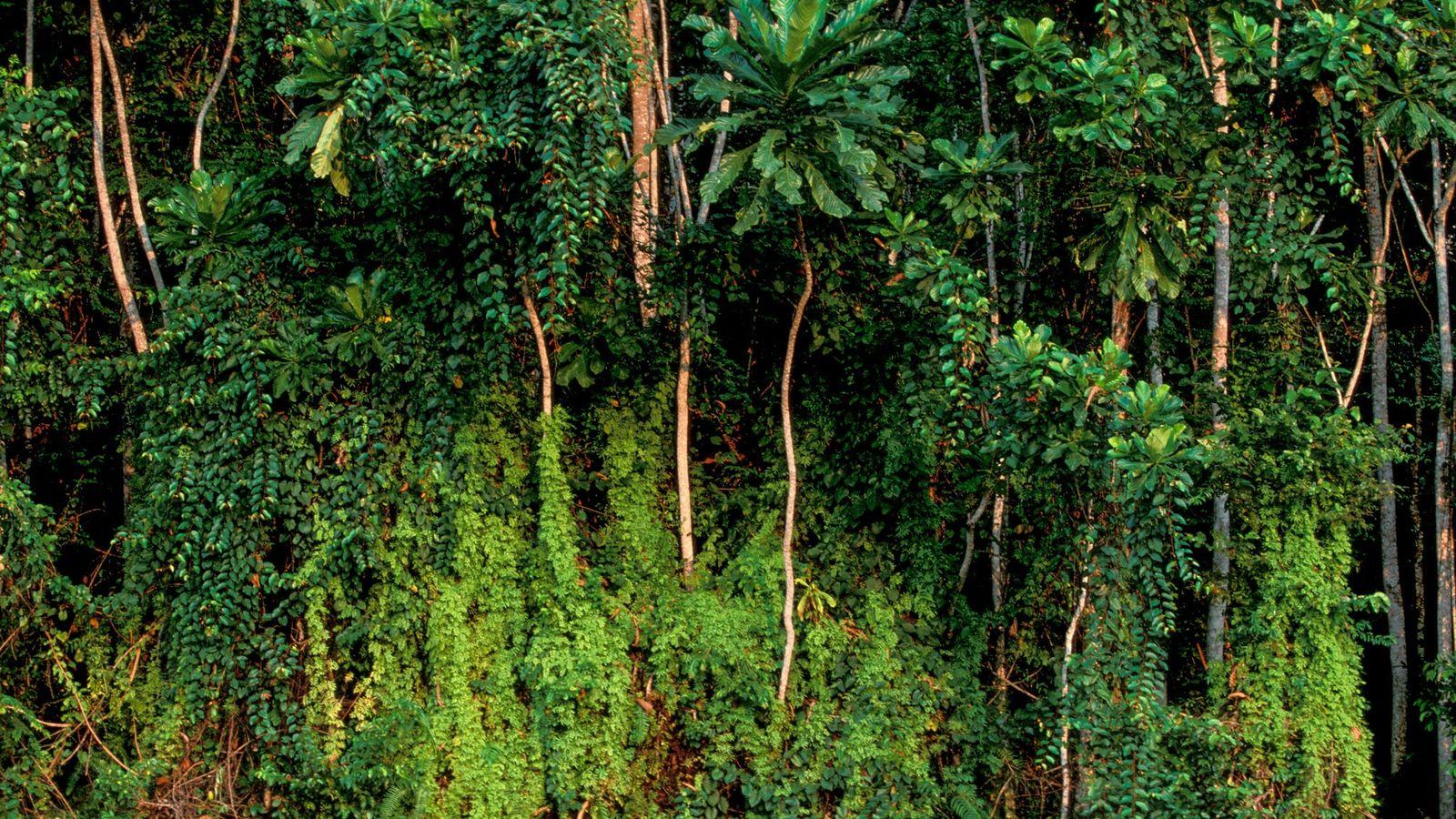 Rabi, Gabón