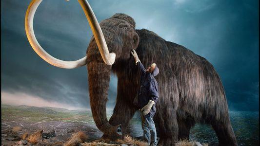 Un grupo de genetistas planea resucitar al mamut lanudo en unos tres años