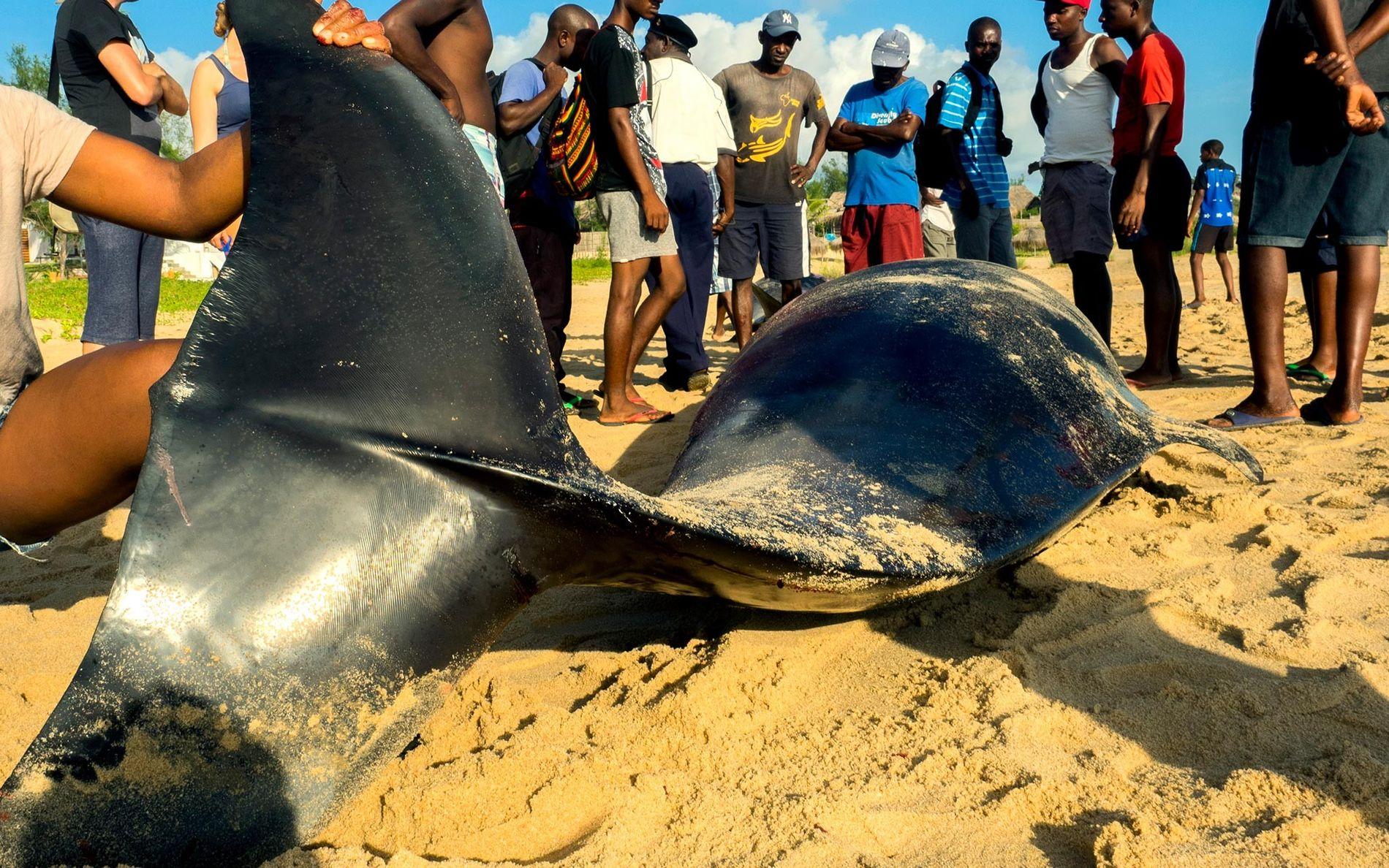 Praia do Tofo, Mozambique