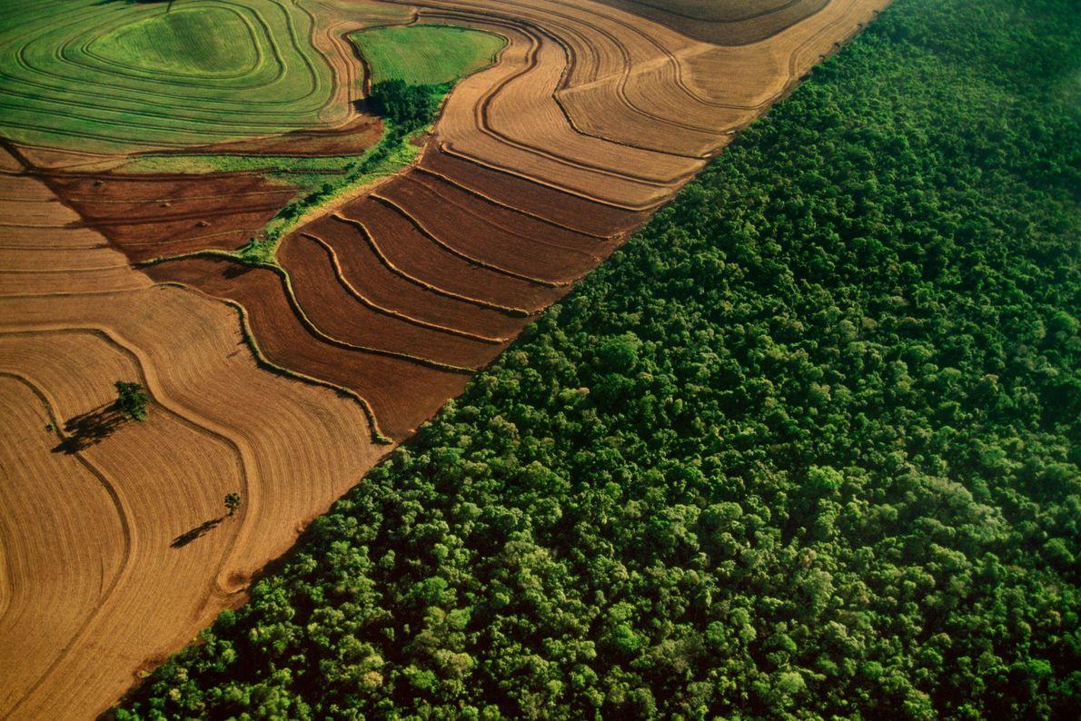 Las tierras de cultivo bordean la selva tropical en el parque nacional de Iguacu, Brasil, víctima …