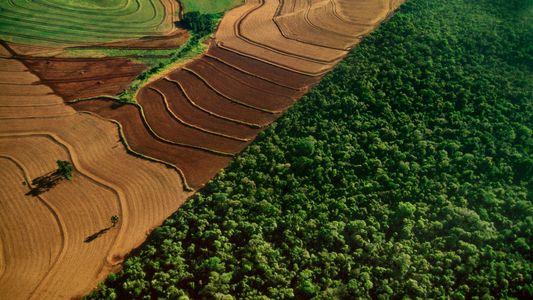 La deforestación tropical descendió en 2017, pero es la segunda peor registrada