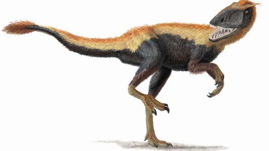 El cerebro de este antepasado del T. rex tenía forma de «ese»