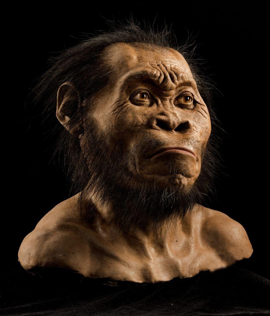 Aunque es primitivo en ciertos aspectos, la cara, el cráneo y los dientes (que vemos en ...
