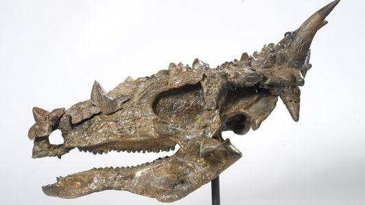 Este dinosaurio herbívoro en realidad podría haber comido carne