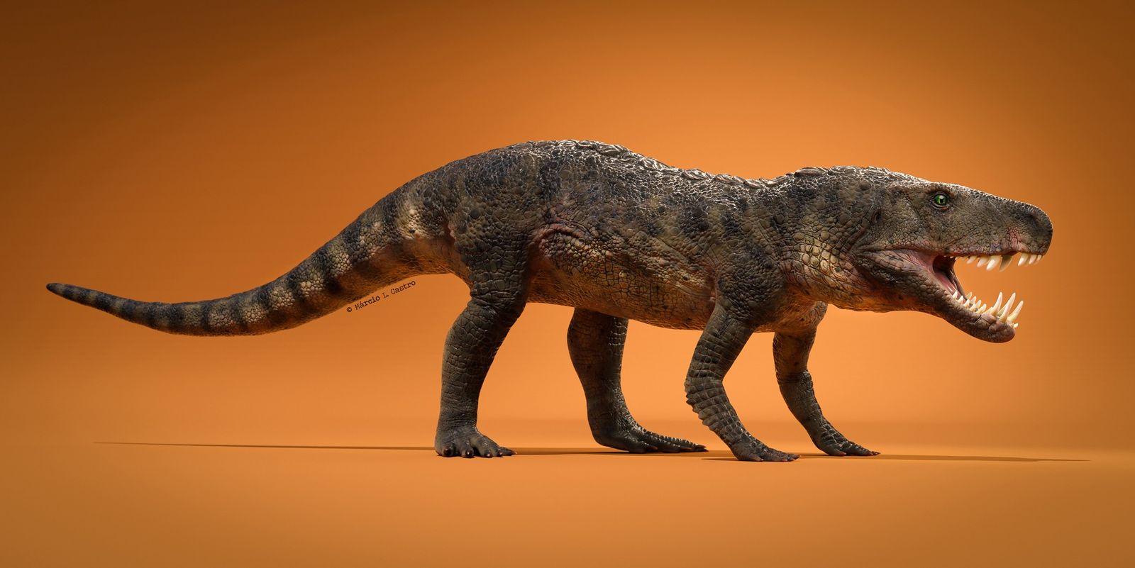 Descubren En Brasil El Fosil De Un Reptil Prehistorico Que Vivio Hace 230 Millones De Anos National Geographic Learn how reptiles became dinosaurs & birds. descubren en brasil el fosil de un