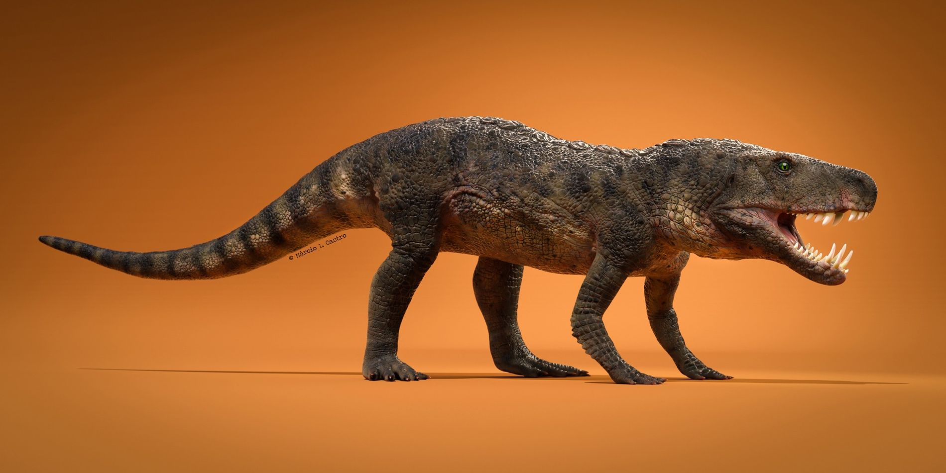 Dynamosuchus collisensi
