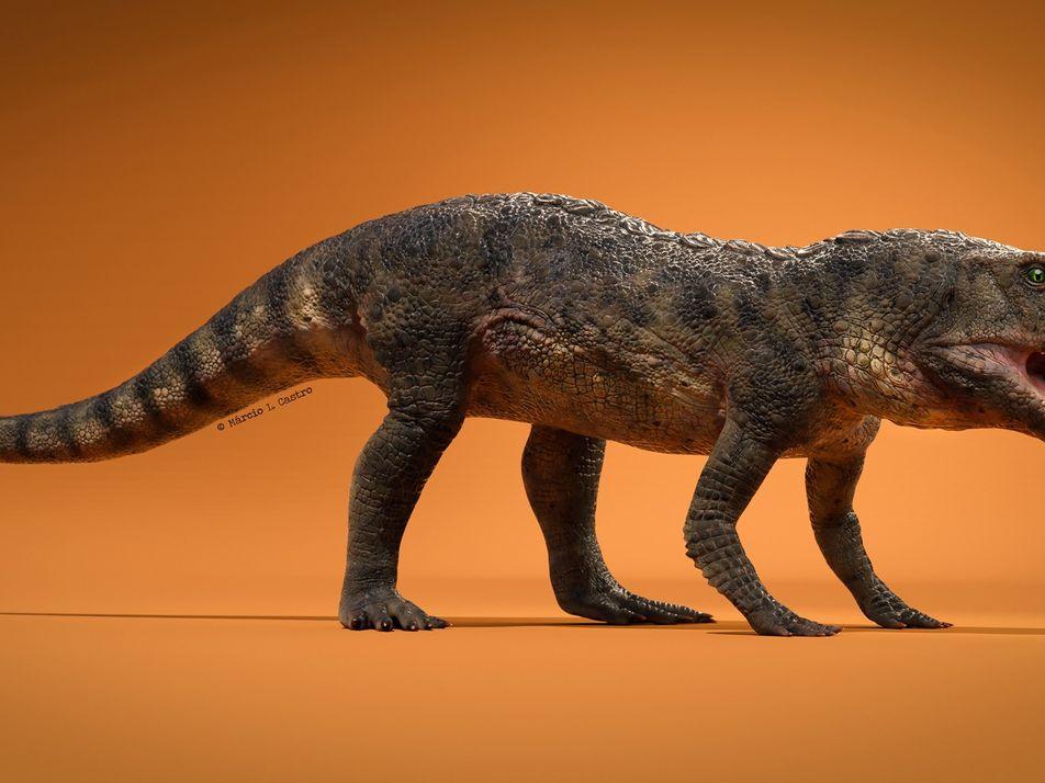 Descubren en Brasil el fósil de un reptil prehistórico que vivió hace 230 millones de años