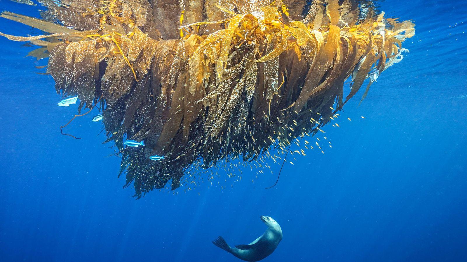 En el Día Mundial del Medio Ambiente, disfruta de estas asombrosas imágenes de la Tierra