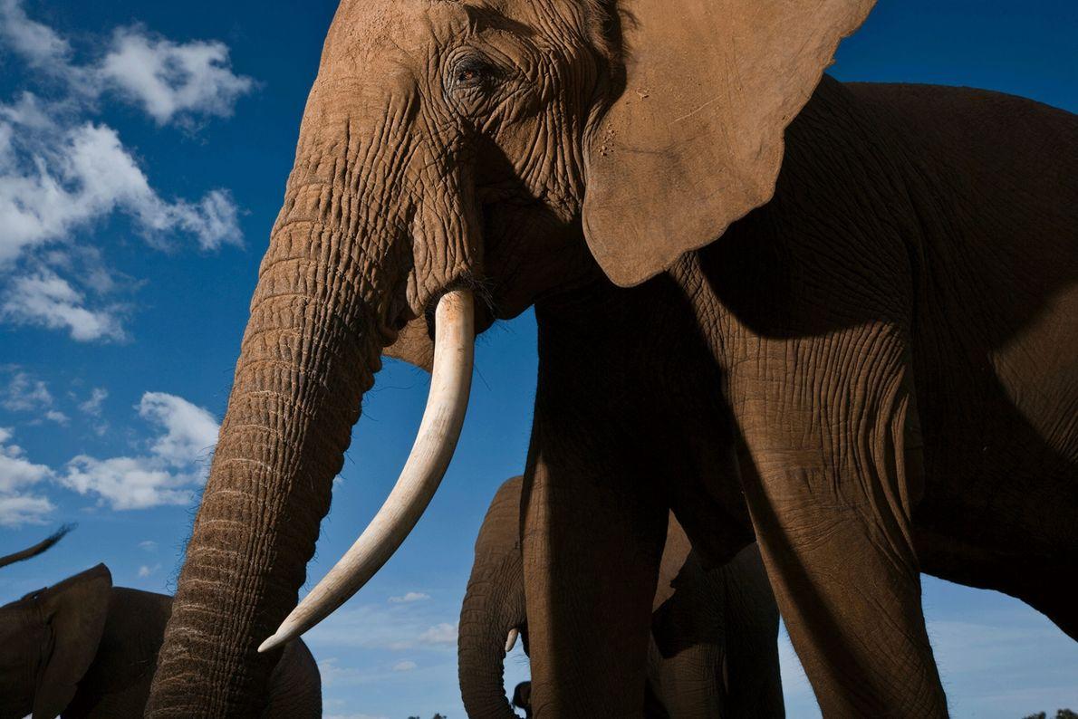 Familia de elefantes en la reserva nacional de Samburu