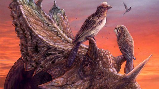 Este fósil de un ave de la era de los dinosaurios es uno de los más ...