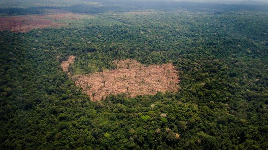 Selva amazónica