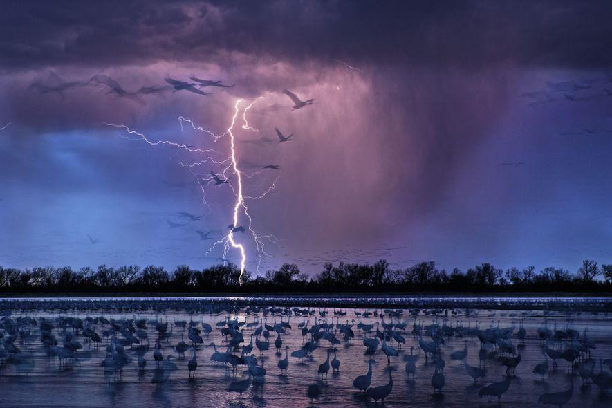 Las aves de las Grandes Llanuras caminan al borde del agua a medida que una tormenta ...