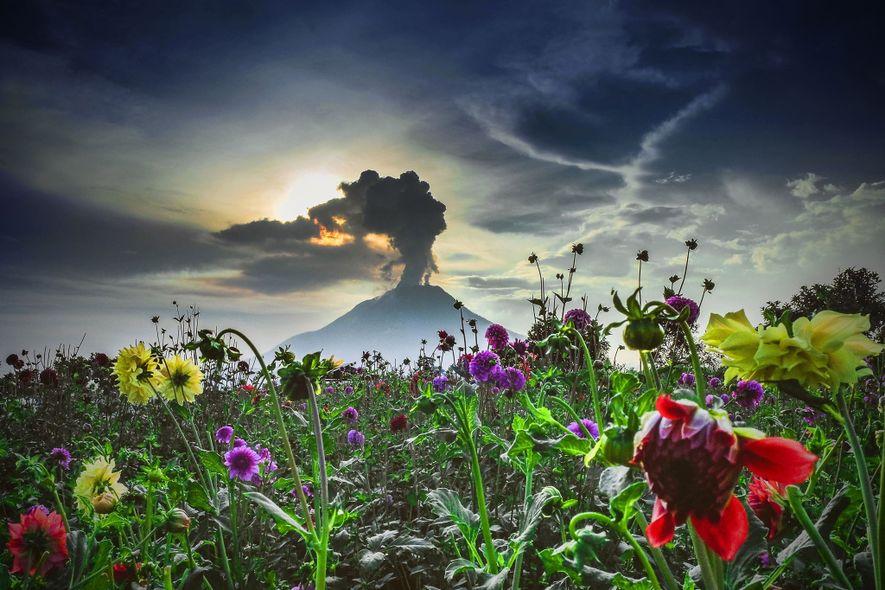 El monte Sinabung, en Indonesia occidental, dormitó durante 400 años hasta que despertó en agosto de ...