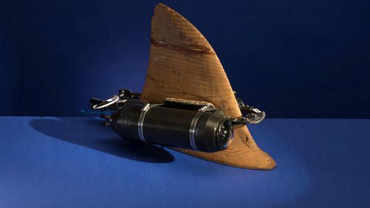 Los inventos que cambiaron la fotografía de vida silvestre