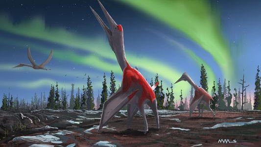 El «dragón helado», el nuevo pterosaurio oculto a plena vista