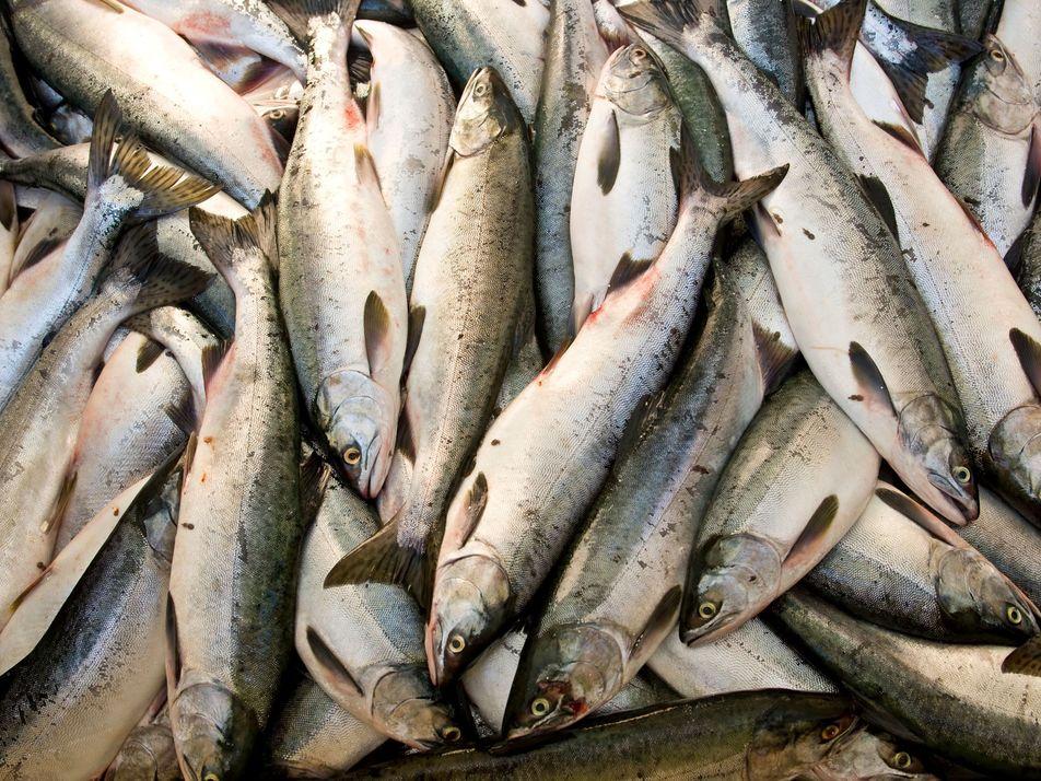 ¿Podrá el océano alimentar a una población creciente?