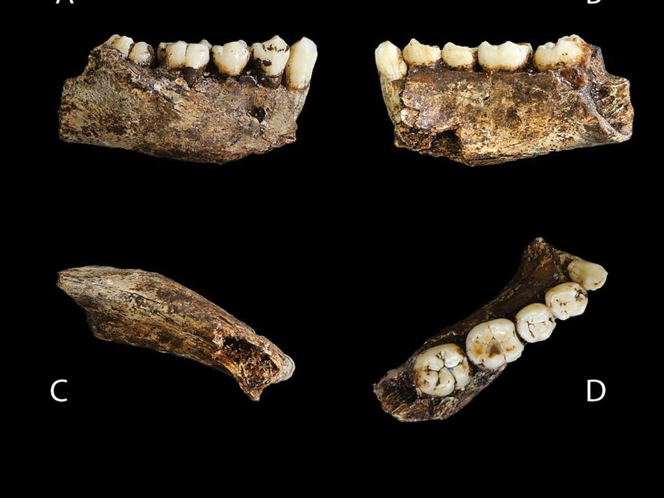 El hallazgo de un esqueleto juvenil de Homo naledi revela cómo crecía este pariente humano