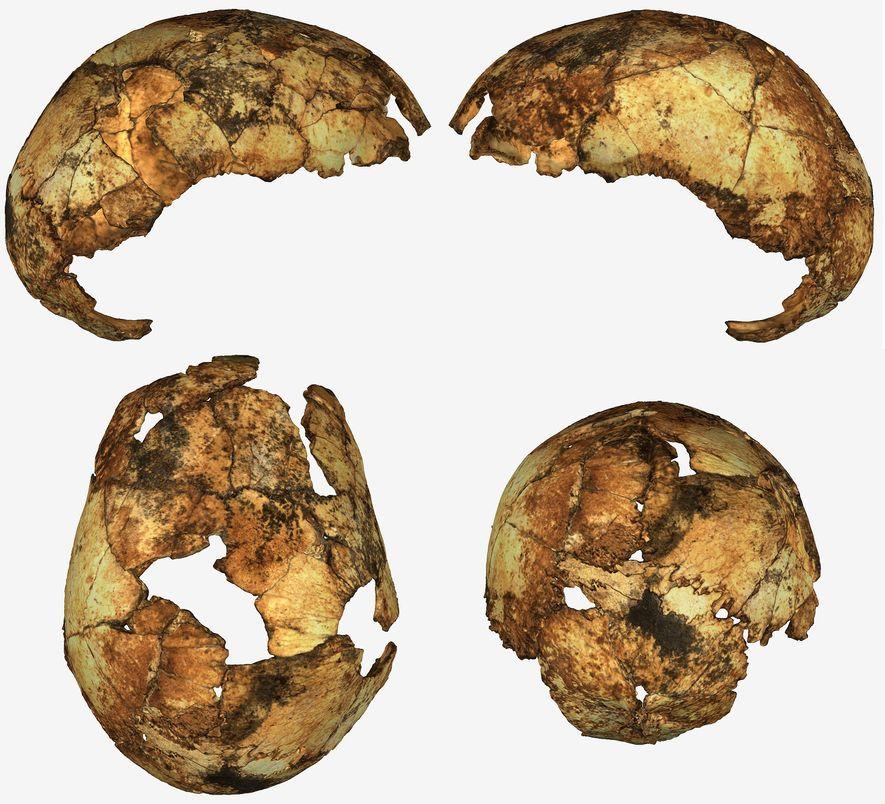 El Homo erectus podría haber vivido entre 150.000 y 200.000 años antes de lo pensado