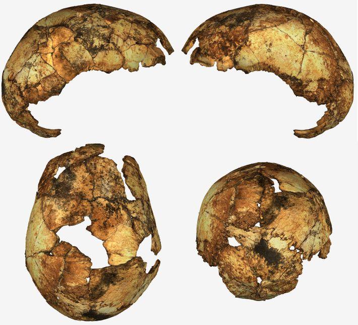 Fotografía de los fragmentos del cráneo de un Homo erectus
