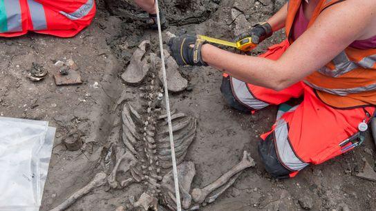 Esqueleto de un varón adulto