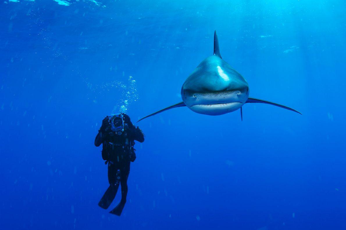 """""""Encontré un tiburón oceánico de puntas blancaspor primera vez cerca de Cat Island,en 2006,junto ami mentor ..."""