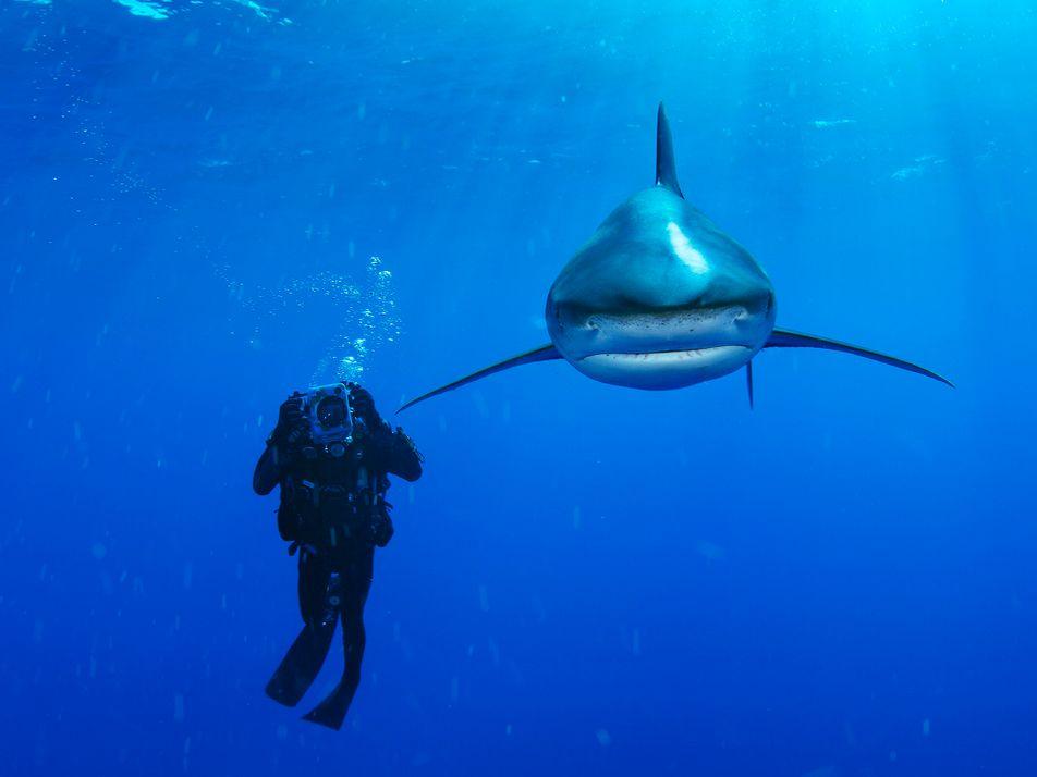 Llega a Madrid la exposición  'Sharks' de National Geographic