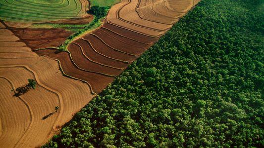 Los planes de Bolsonaro para la selva amazónica