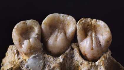 Estos dientes de neandertal revelan detalles íntimos de su vida cotidiana