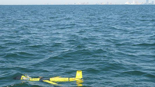La acidez del océano aumenta: ¿qué significa?