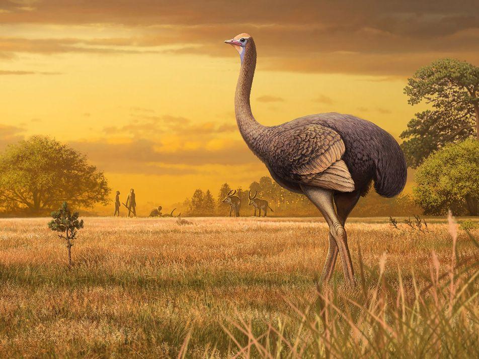 Este ave gigante convivió con los homínidos en Europa