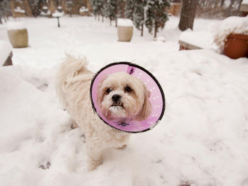 Los perros, las otras víctimas de la crisis de opiáceos de Estados Unidos