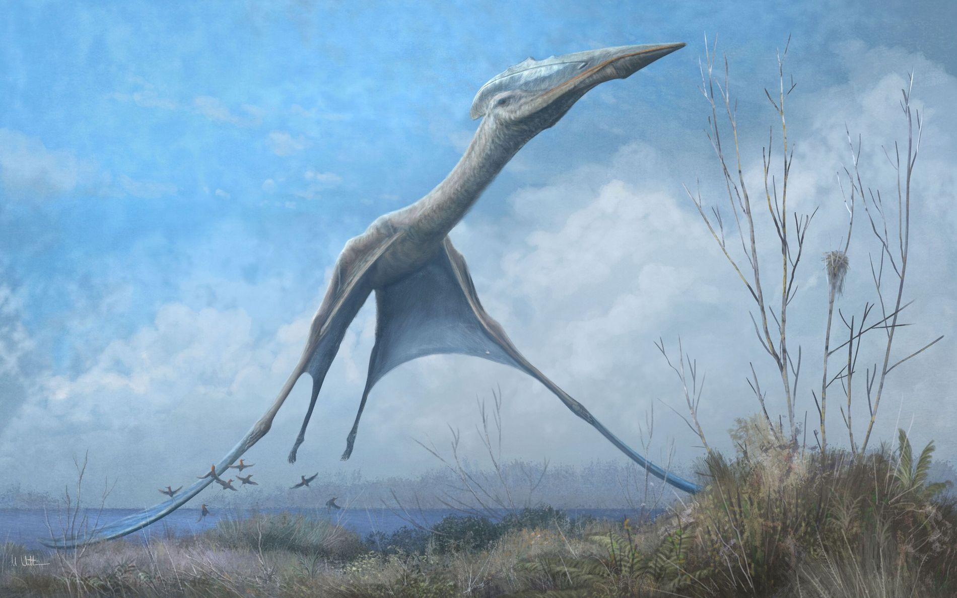 <p>An azhdarchid pterosaur takes flight in Romainia in an illustration. Fossils recovered from the fire-damaged Museu Nacional in Brazil show that flying reptiles from this same group also soared over Antarctica in the late Cretaceous.</p>