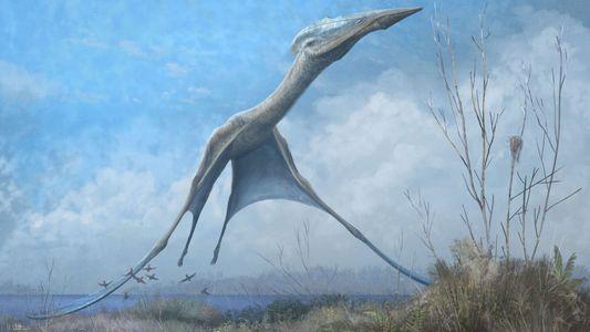 Descubren un pterosaurio antártico que se salvó del incendio del Museo Nacional de Brasil