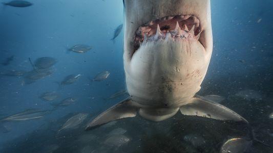 ¿Por qué nos dan miedo los tiburones? Esta es la explicación científica