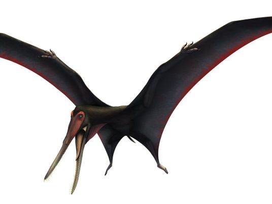 Unusual toothy pterosaur found hidden in the wrong group