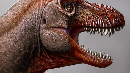 Descubren en Canadá un tiranosáurido de 79,5 millones de años