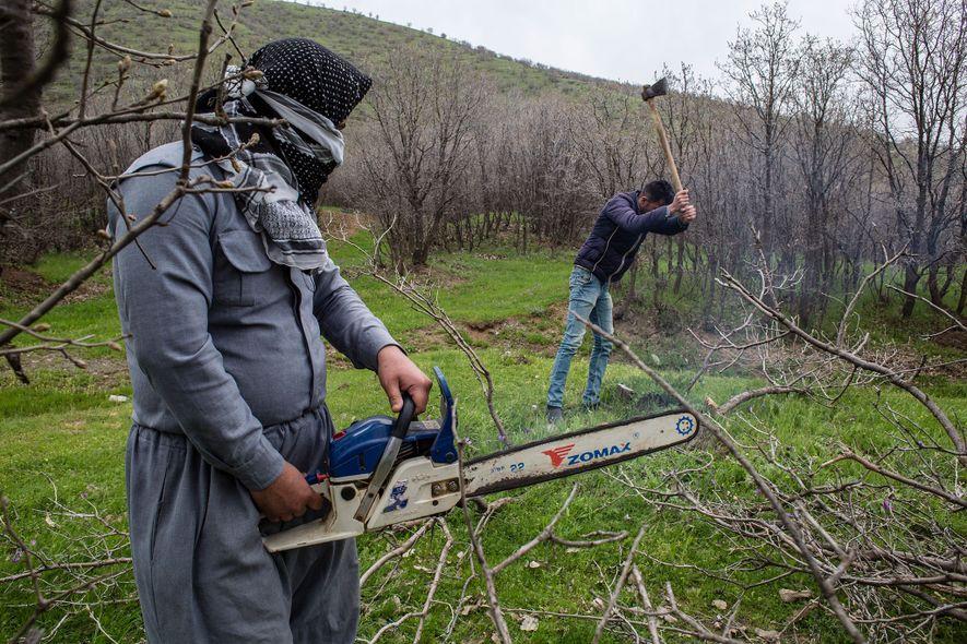 Ante la falta de petróleo y electricidad, la gente recurre a los bosques para obtener combustible ...
