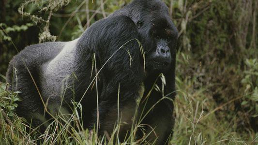 ¿Por qué a los animales también les salen canas?