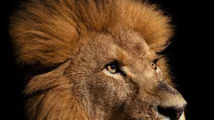 Las imágenes más impresionantes de grandes felinos