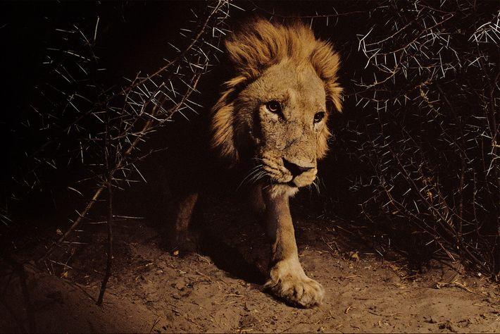 León durante la noche