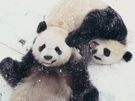 15 tiernas fotos de animales jugando en la nieve