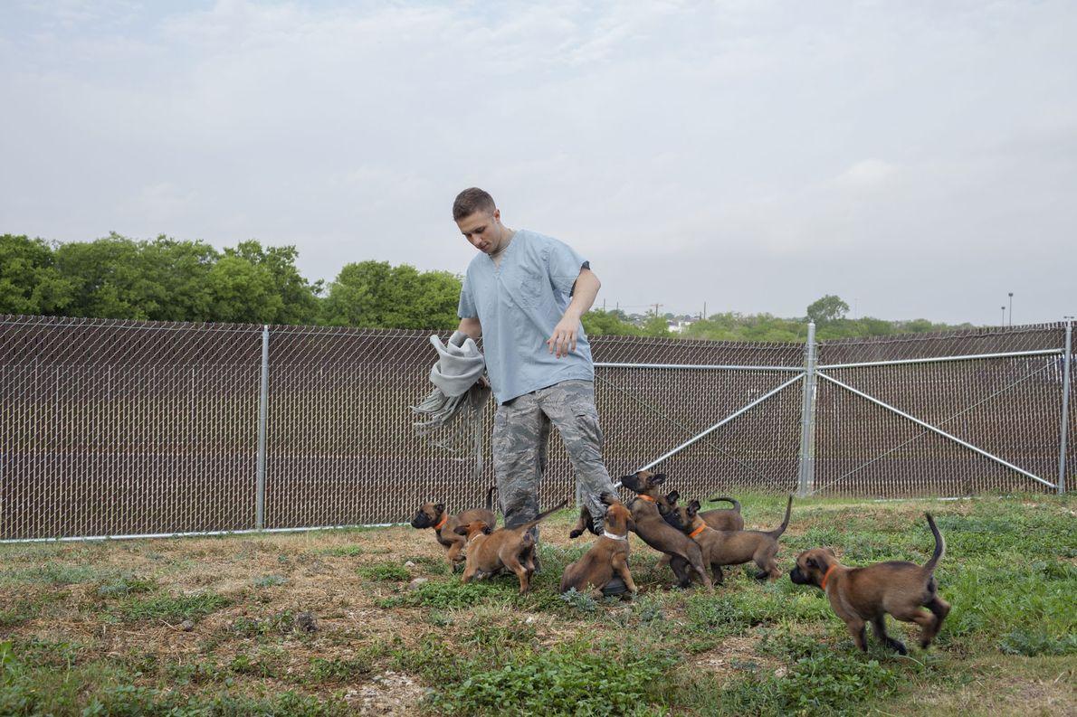 El aviador de primera Stephen Risiger juega con cachorros de pastor belga malinois de siete semanas …