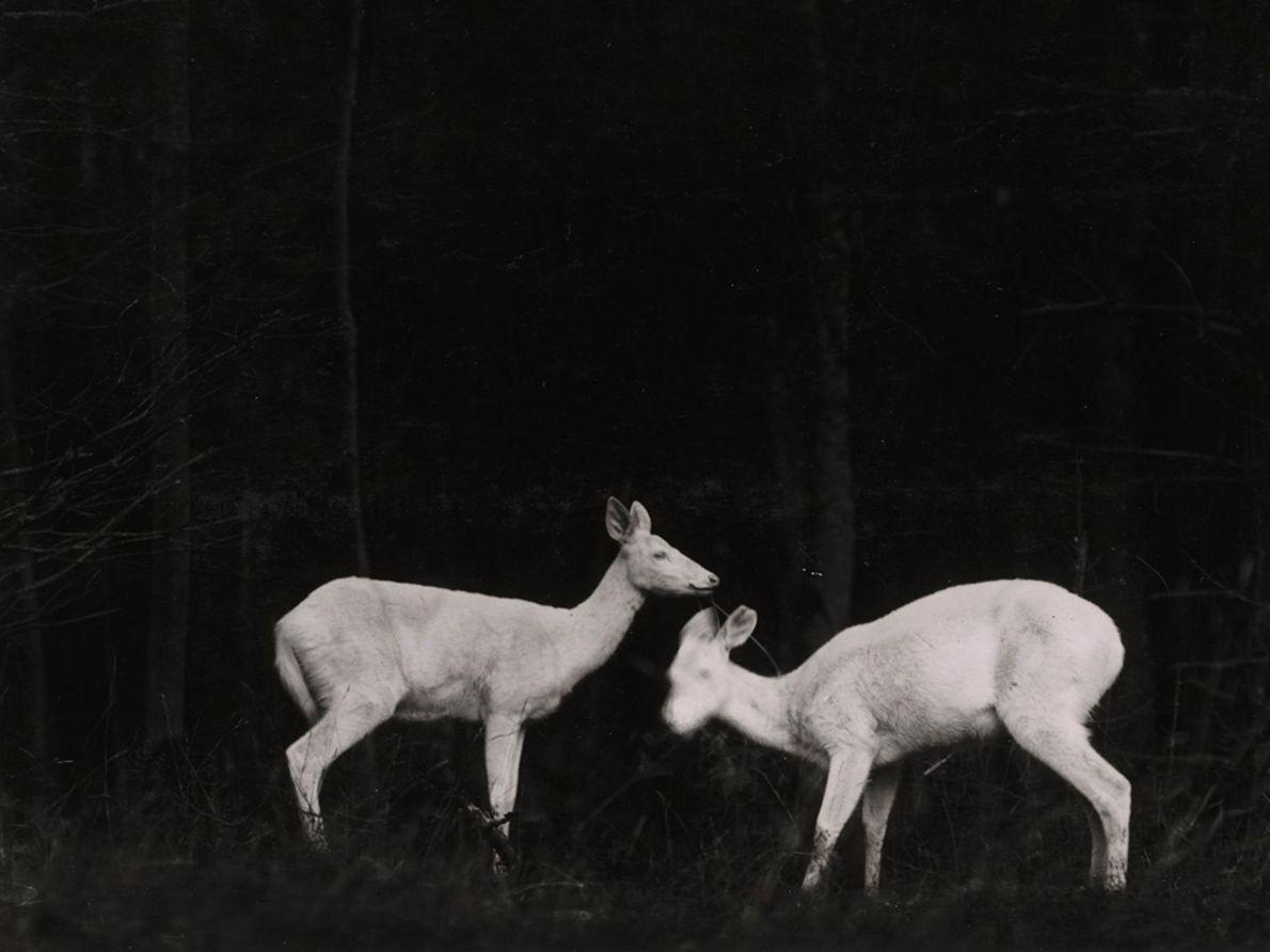 Fotografía de fauna salvaje