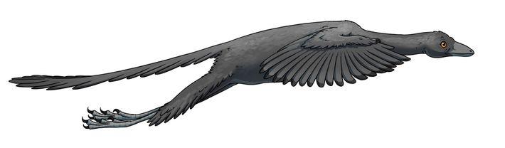Archaeopteryx volando
