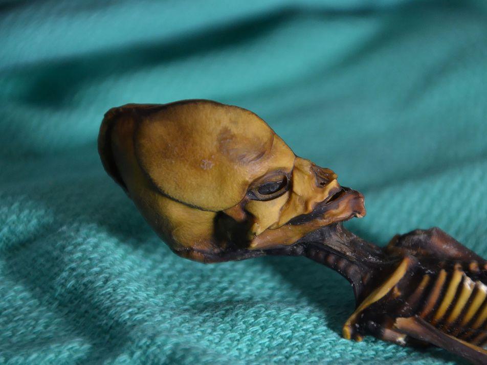 Resuelto el misterio de la «momia extraterrestre» del desierto de Atacama