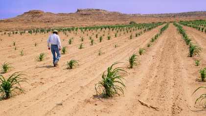 El cambio climático está acabando con la sabiduría indígena agrícola milenaria