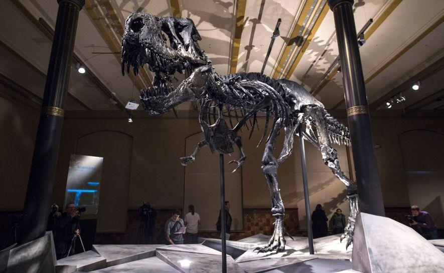 Un esqueleto de Tyrannosaurus rex en el centro de biodiversidad Naturalis, en los Países Bajos.