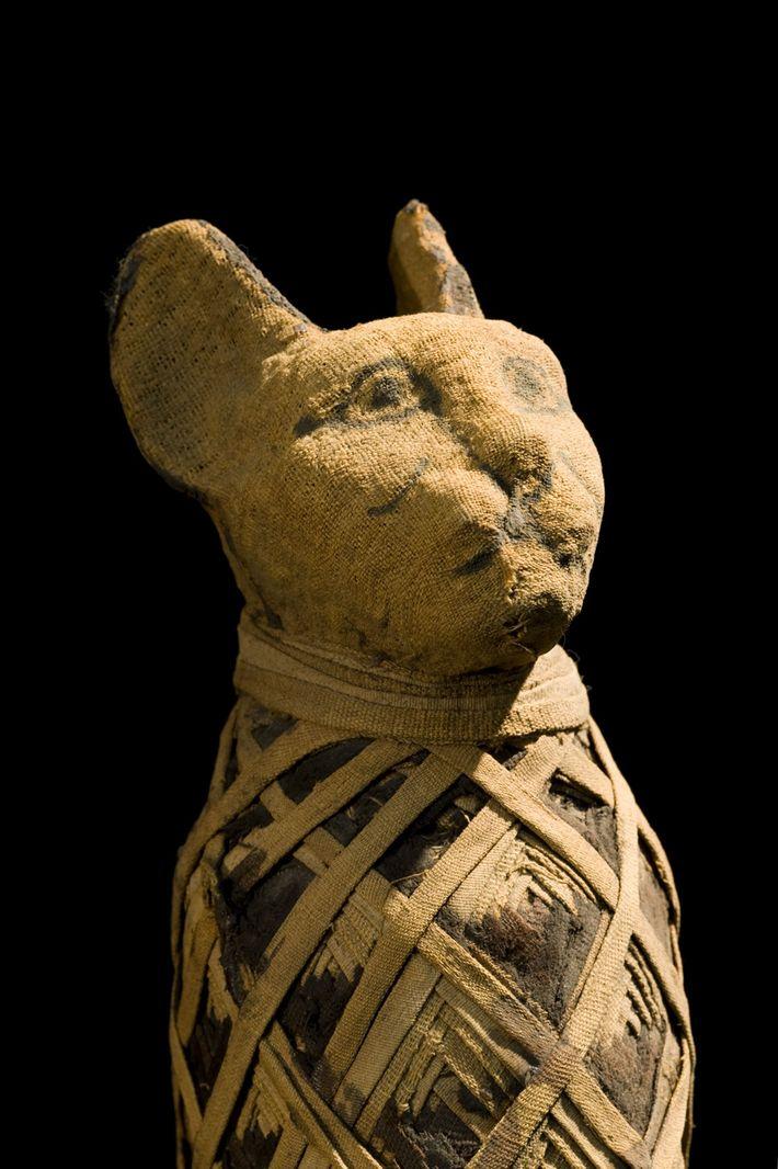 Momia de gato