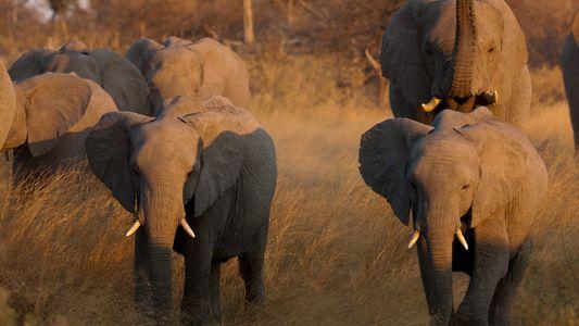 Reducir la pobreza y la corrupción será fundamental para salvar a los elefantes africanos