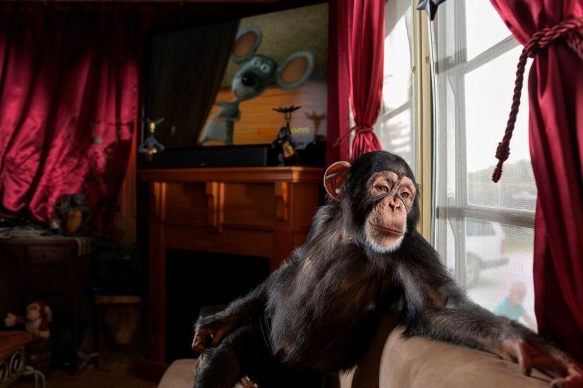 Pamela Rosaire Zoppe y su chimpancé